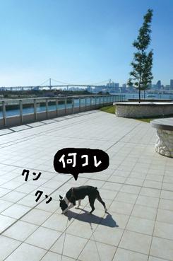 f0170072_226493.jpg