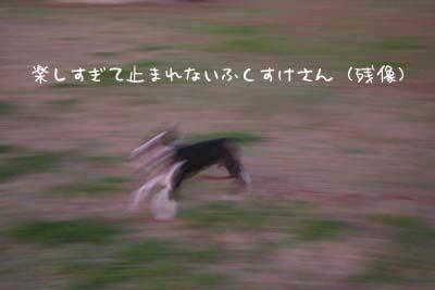 d0067276_18445731.jpg