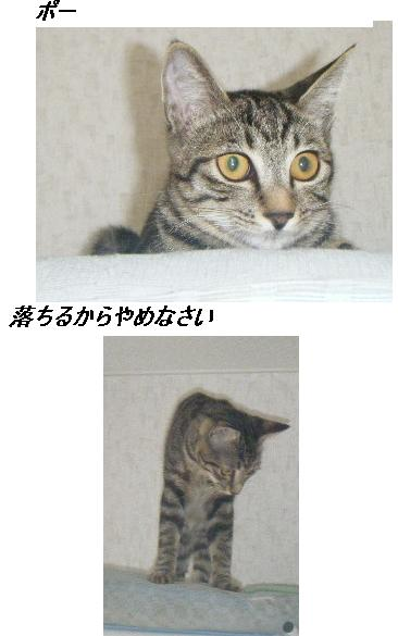 b0112380_122174.jpg