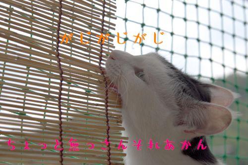 f0197682_20364030.jpg