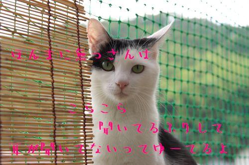 f0197682_20371145.jpg