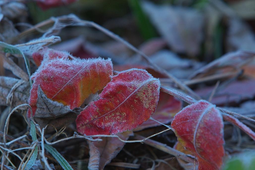 明日は霜が・・・冷え込みますよ~_e0143883_20362364.jpg