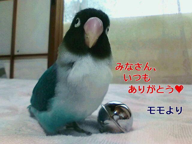 f0126418_11544025.jpg