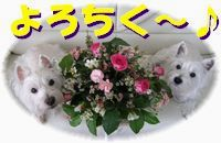 f0084422_80234.jpg