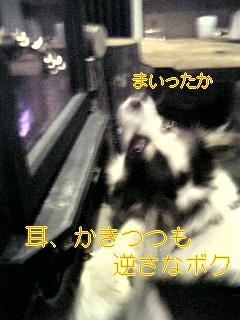 f0148927_10284515.jpg