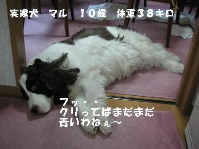 c0179136_16150.jpg