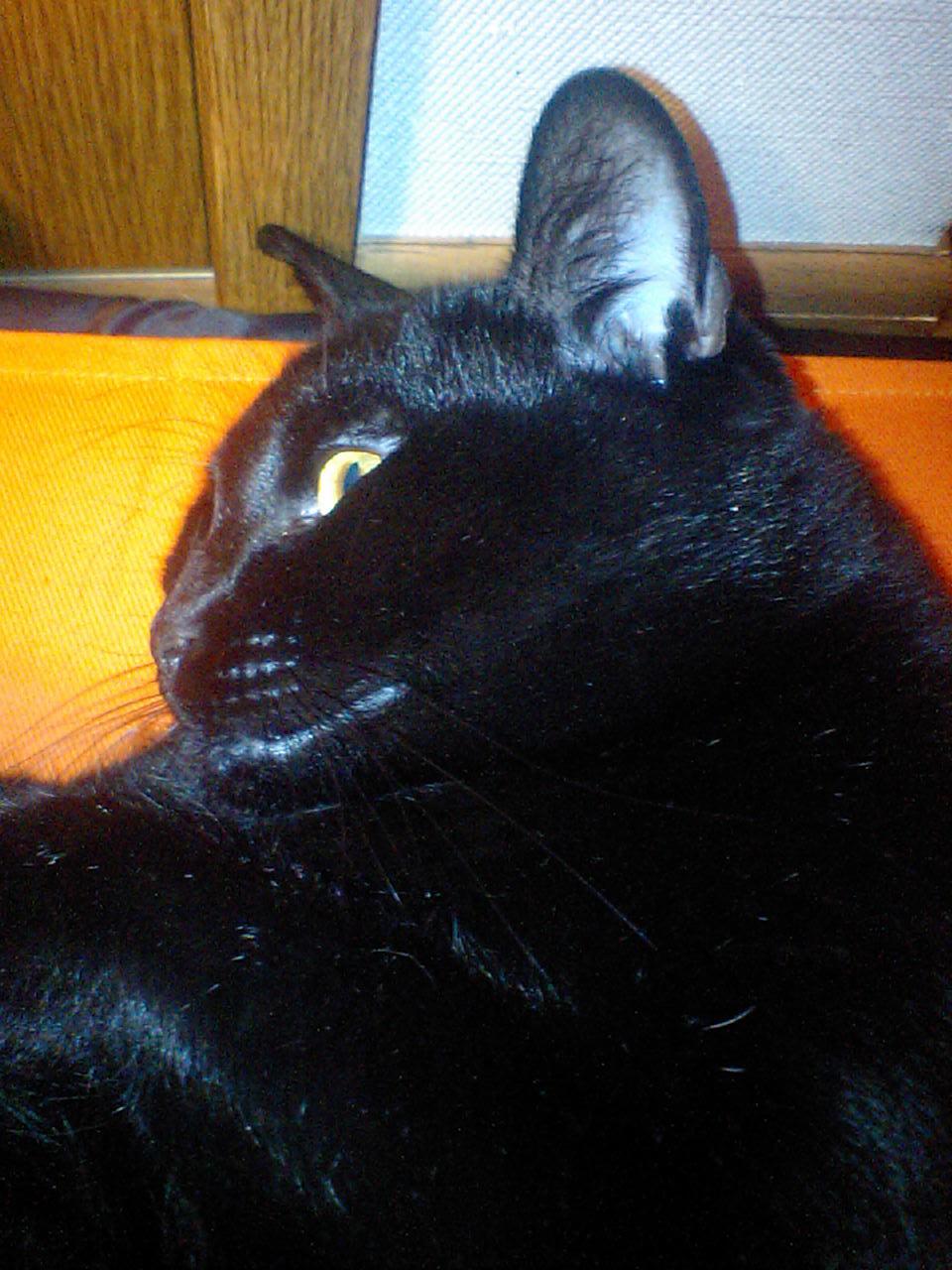 猫とケーキ それから天ぷら_f0128542_23473679.jpg