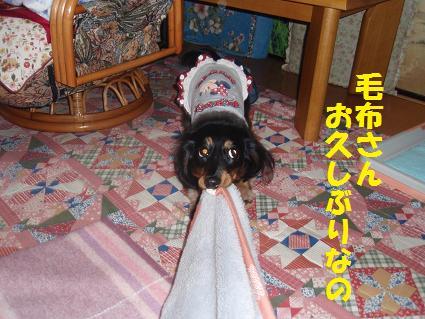 c0151866_22125819.jpg