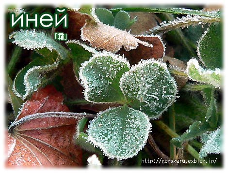 【ロシア語】写真「霜で輝くクローバー」/時刻の言い方_e0132084_22301685.jpg