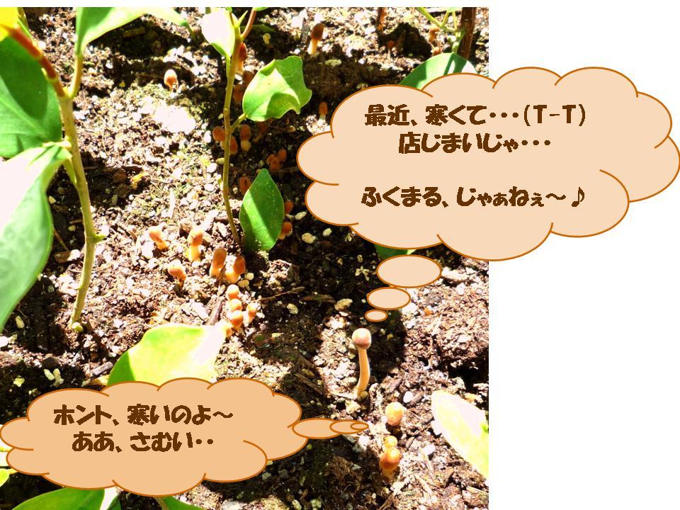 b0129300_17534138.jpg