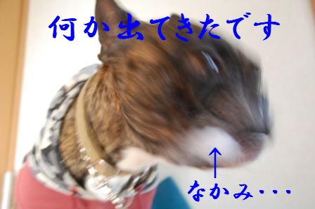 c0130324_21455455.jpg