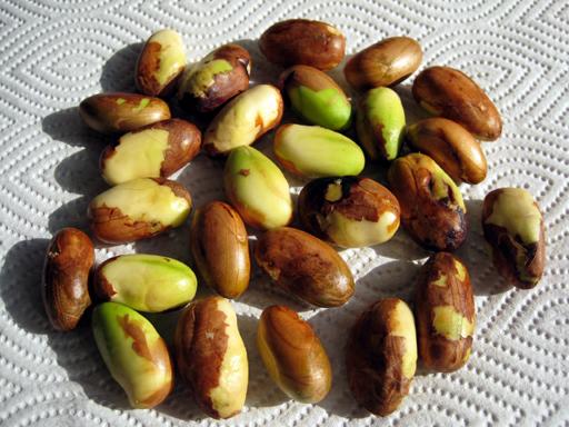 ジャックフルーツの種子、Jackfruit seeds