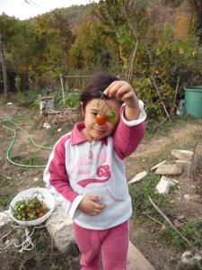 プチトマトの保存方法_f0106597_1182956.jpg