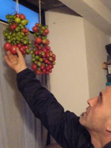プチトマトの保存方法_f0106597_1211068.jpg