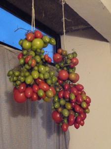 プチトマトの保存方法_f0106597_1215646.jpg