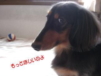 ピンポーン♪_c0058727_2146365.jpg