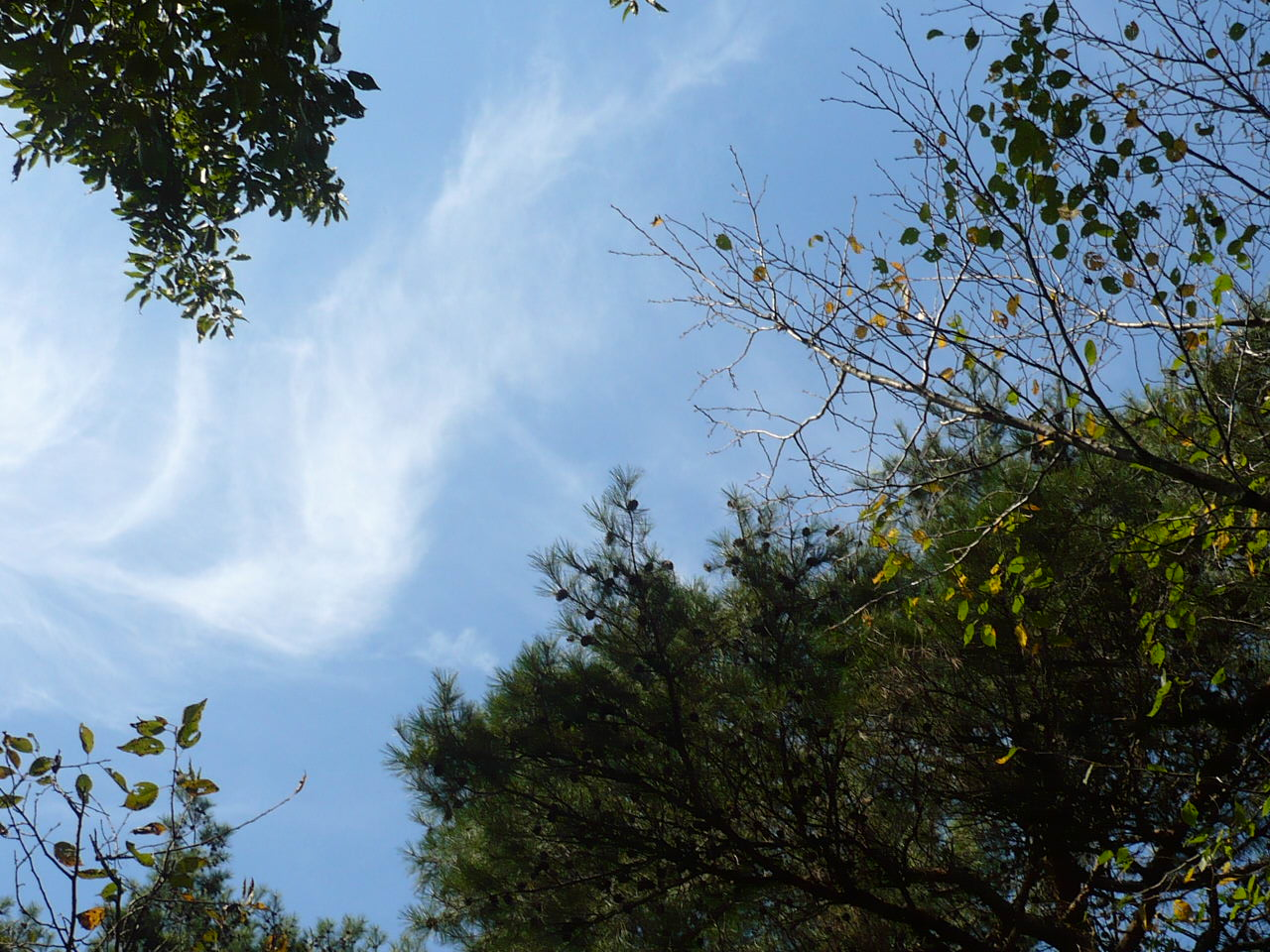 【速報】 『房総のむら』秋祭り情報_f0193752_19453818.jpg