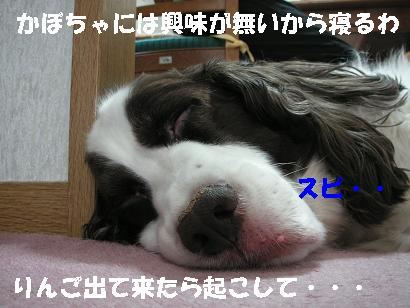 c0179136_22502454.jpg