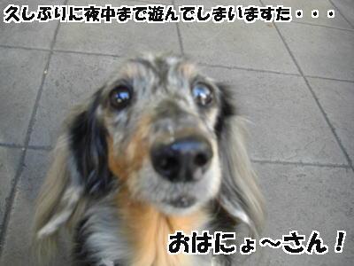 d0020869_494750.jpg