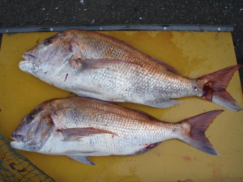 2009いまりマリーナ秋季釣り大会_a0077071_10244722.jpg