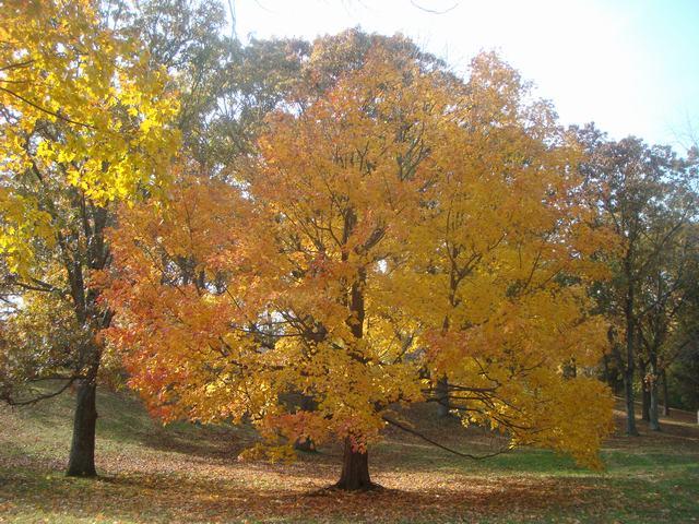 黄葉を堪能した週末、_d0100880_18203895.jpg