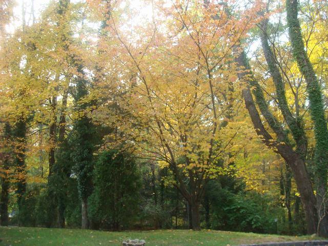 黄葉を堪能した週末、_d0100880_1823307.jpg
