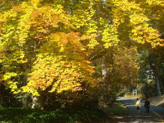 黄葉を堪能した週末、_d0100880_1892145.jpg