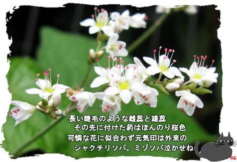f0137096_10531785.jpg