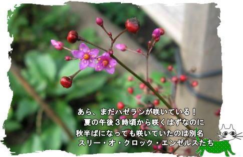 f0137096_10544775.jpg