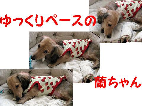 c0108112_00824.jpg