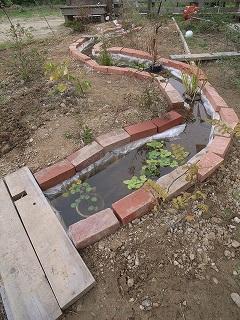 全長8メートルの池_f0059988_8242461.jpg