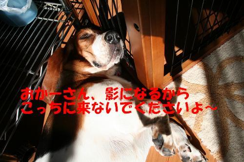 f0121712_1964753.jpg