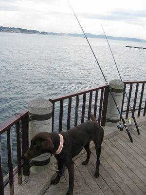 釣りと海♪_b0148945_1651691.jpg