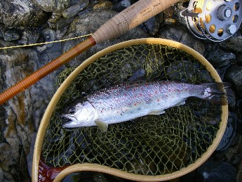 小川川冬季釣り場特別採捕。_c0153951_1644274.jpg