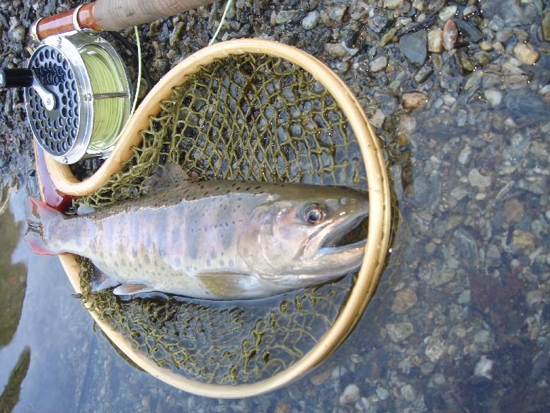 小川川冬季釣り場特別採捕。_c0153951_1734830.jpg
