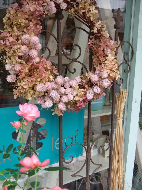 オークリーフ(紅葉と薔薇と草花と)_f0049672_12242147.jpg
