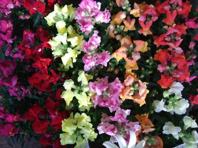 オークリーフ(紅葉と薔薇と草花と)_f0049672_1224750.jpg