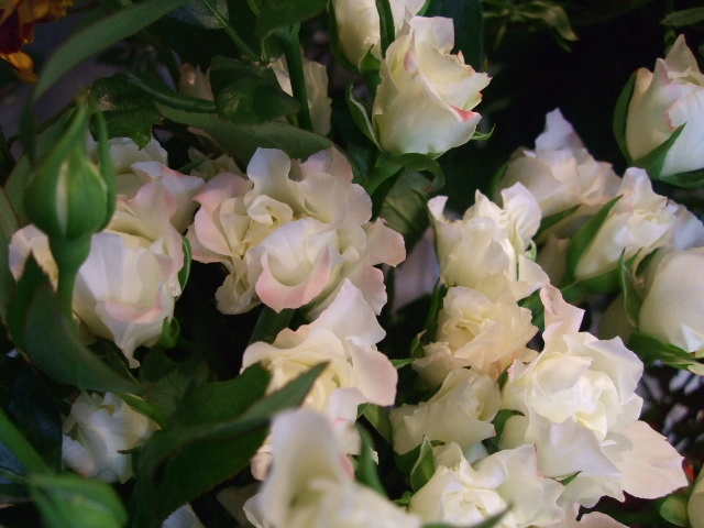 オークリーフ(紅葉と薔薇と草花と)_f0049672_12353929.jpg