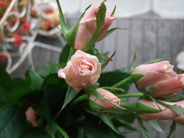 オークリーフ(紅葉と薔薇と草花と)_f0049672_12354555.jpg
