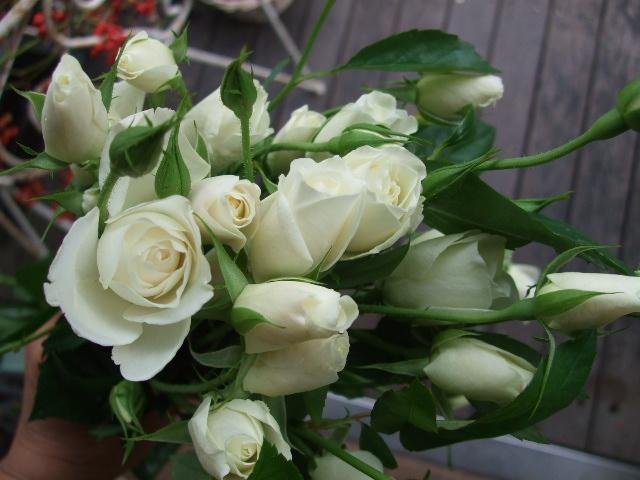 オークリーフ(紅葉と薔薇と草花と)_f0049672_12355282.jpg