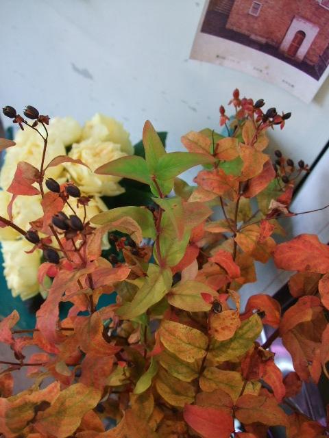 オークリーフ(紅葉と薔薇と草花と)_f0049672_1236035.jpg