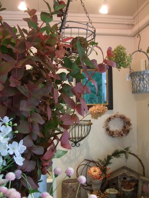 オークリーフ(紅葉と薔薇と草花と)_f0049672_12361572.jpg