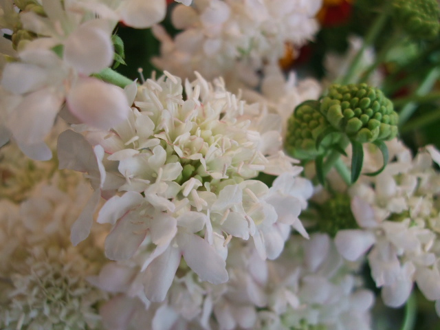 オークリーフ(紅葉と薔薇と草花と)_f0049672_12362774.jpg