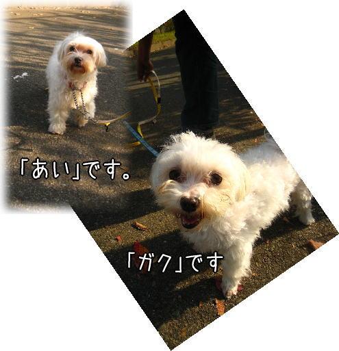 f0187974_22314374.jpg