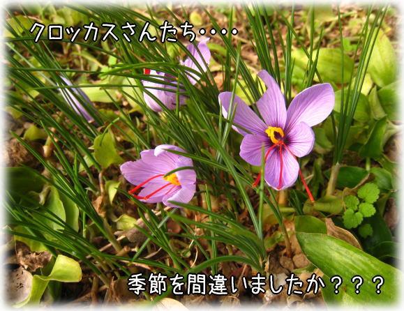 f0187974_2238945.jpg