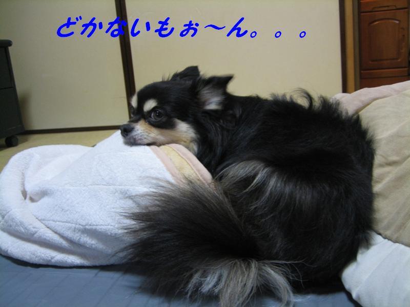 b0150088_2048349.jpg
