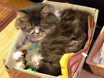 めかぶ箱で熟睡