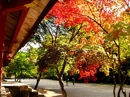 紅葉を訪ねて-神護寺2大師堂_e0048413_2381959.jpg
