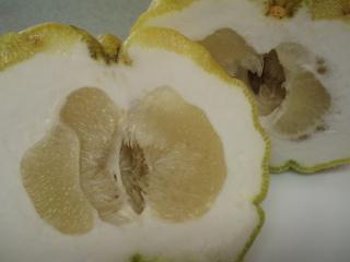 +++獅子柚子を・・・+++_e0140921_5404876.jpg