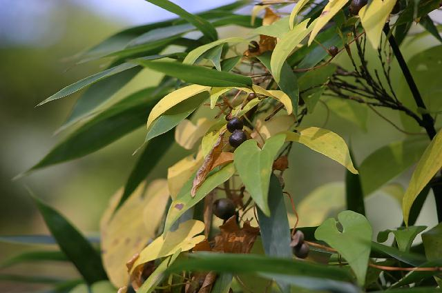 食欲の秋。。実りの秋です。。_b0110629_026816.jpg